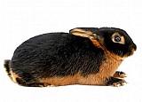 Pele de coelho   compro