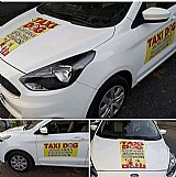 Taxi dog montanha  transporte de animais de estimacao