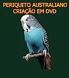 Periquito australiano criacao em dvd