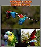 Papagaio e arara criacao em dvd