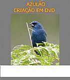 Azulao criacao em dvd