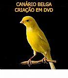 Canario belga criacao em dvd