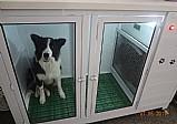 Secadora para pet shop