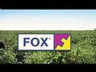 Fox fungicida oferta