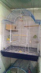 Casal de forpus \ gaiola e acessorios no rj
