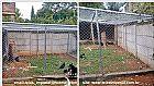 Canil,  gatil,  viveiro - regiao de varzea paulista