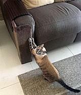 Arranhador protetor cantos de sofa