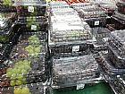 Molde vacuun forming para caixa de uvas 02 kgs
