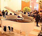 Lindo piano essenfelder 1/4 de cauda branco