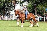 Cavalo de raca docil