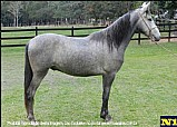 Cavalo negrita de marancar universo de marancar