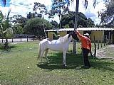 Ponei a venda venda de cavalos 3 animais