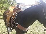 Cavalo puro sangue a veda e acessorios