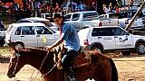 Cavalos quarto de milha em osasco