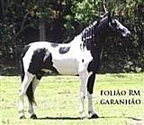Cavalo pampa,  mangalarga marchador