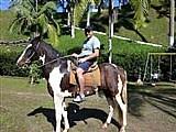 Cavalo mangalarga - pampa de preto