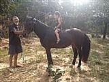 Cavalo pampa de esporte