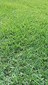 Tapetes de grama esmeralda direto do produtor
