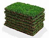 Tapetes de grama esmeralda vendemos e plantamos