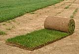 Tapetes de gramas de qualidade