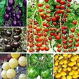Sementes de tomate 12 especies,  10 de cada   brindesssss
