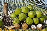 Coco verde e seco