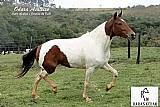 Égua pampa mm registrada á venda - estudo troca carro/moto