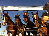 Hospedagem para cavalos no ro vermelho