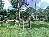 Hospedagem para cavalos em geral
