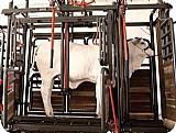 Tronco de contencao para bovino multiflex,  para todas as fases de criacao,  com garantia de 2 anos da fabrica,  entregamos e instalamos em todo parana. detalhes do anuncio      categoria: outros animais e acessorios  localizacao      munici