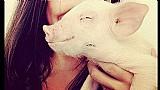 Mini pig porquinhos mine porco branquinho rosado