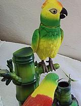 Papagaios canta e mexe o asas a cauda - a55