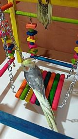 Playground para papagaios / calopsitas e aves de porte medio