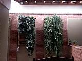 Jardim ou horta vertical painel com pallets
