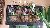 Painel jardim vertical fibra de coco e moldura em cruzeta