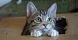 Gatos viralata