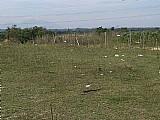 Terrenos em itaguai