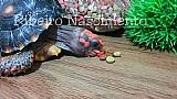 Racao para jabutis,  tartarugas e cagados