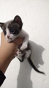 Doacao de gatinho macho