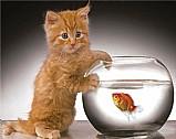 Como cuidar do seu gato clik aqui sgo.hotmart.com/e5009487t