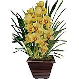Orquidea arranjos entrega em contagem mg flora