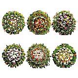 Floricultura  entrega coroa de flores cemiterio vespasiano,  coroas de flores cemiterio municipal parque da ressurreicao em vespasiano mg