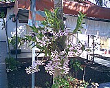 Jardinagem e paisagismo londrina