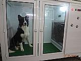 Procuro investidor para industrializar secadoras para pet shop