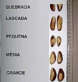 Lote de castanha brasileira