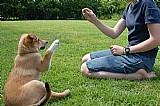 Guia de adestramento de caes-passo a passo