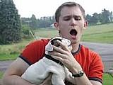 Filhotes bulldog ingleses bonitos