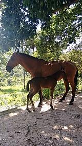 Égua e seu potrinho