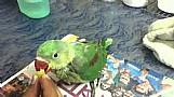 Anuncio exclusivo de papagaios
