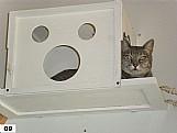 Gatos - acessorios